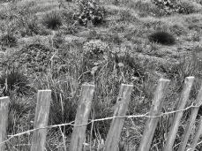 Spring Fence