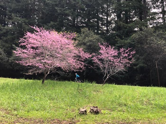 Bike among the trees