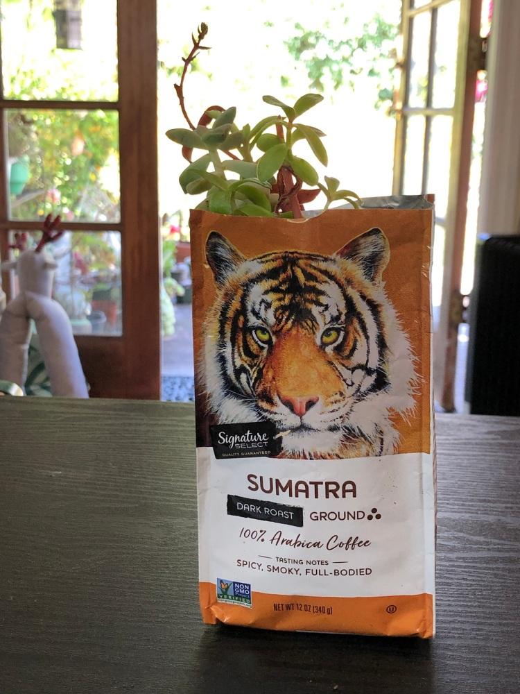 Succulent in coffee bag
