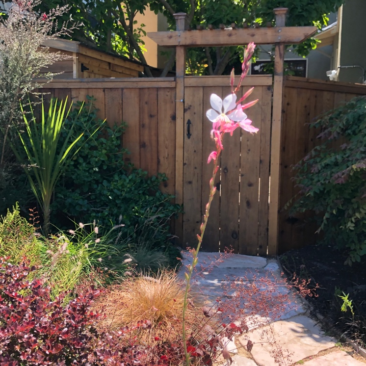 Gate and flower