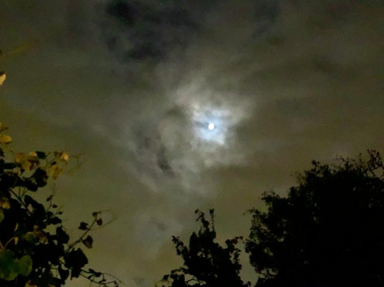 Moon and Foog