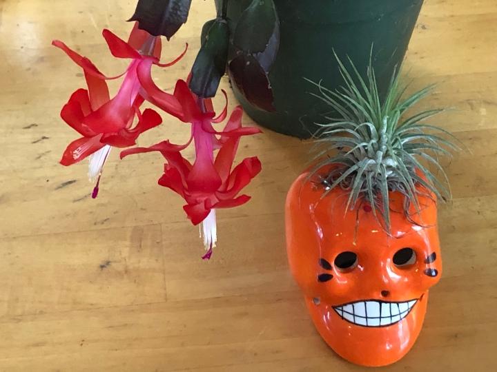 Cactus and skull