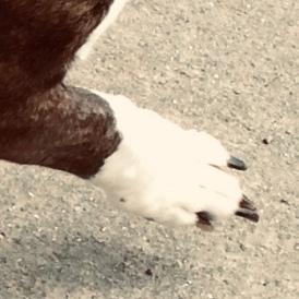 Pup manicure