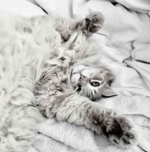 Lee Williams Cat photo