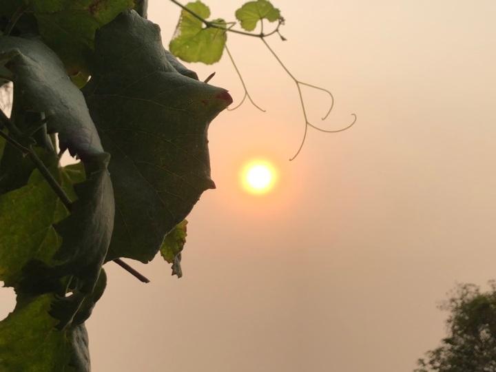 Smoky Sun