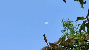 Ble sky and Moon