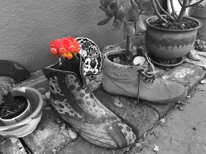 Potted boots