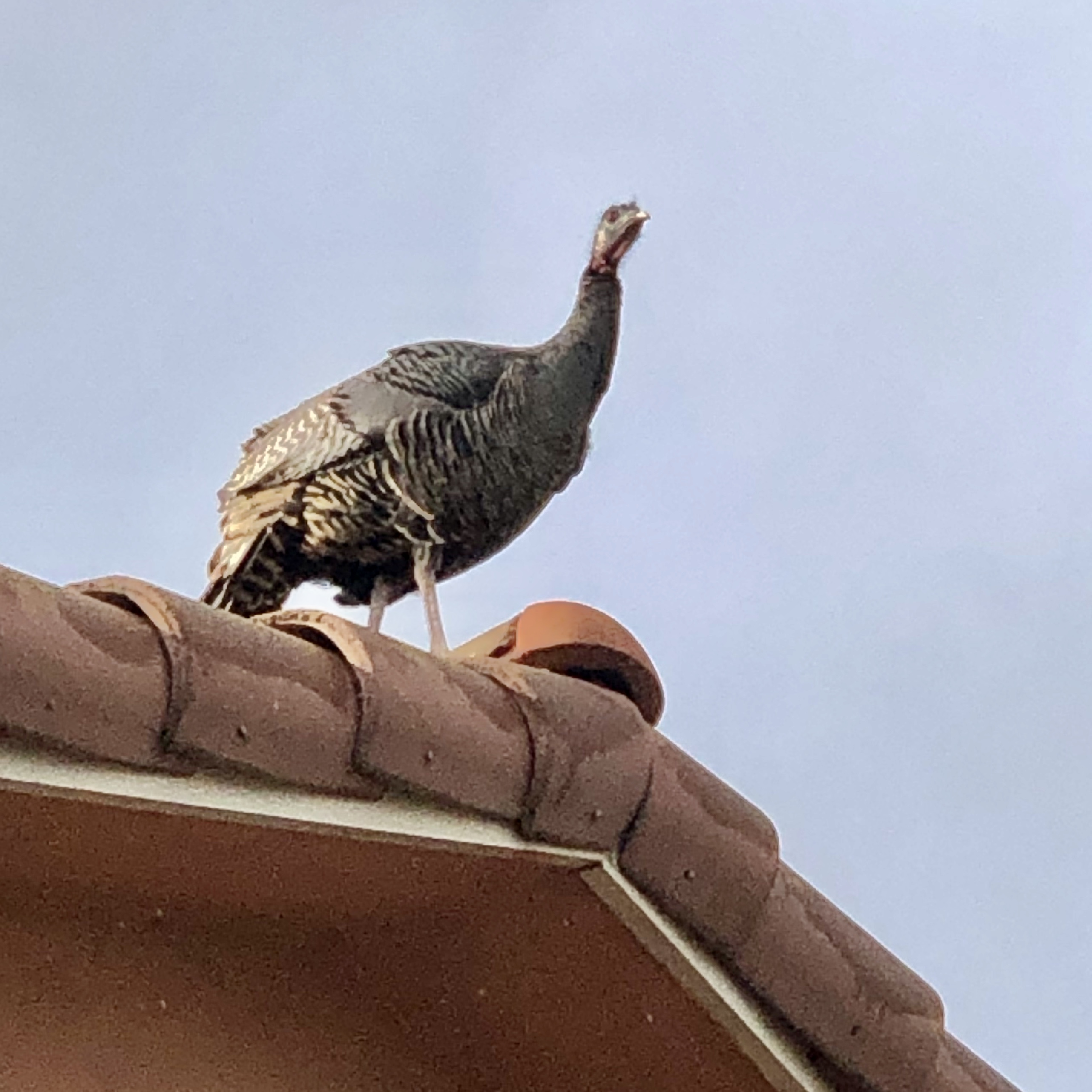 Turkey up on the