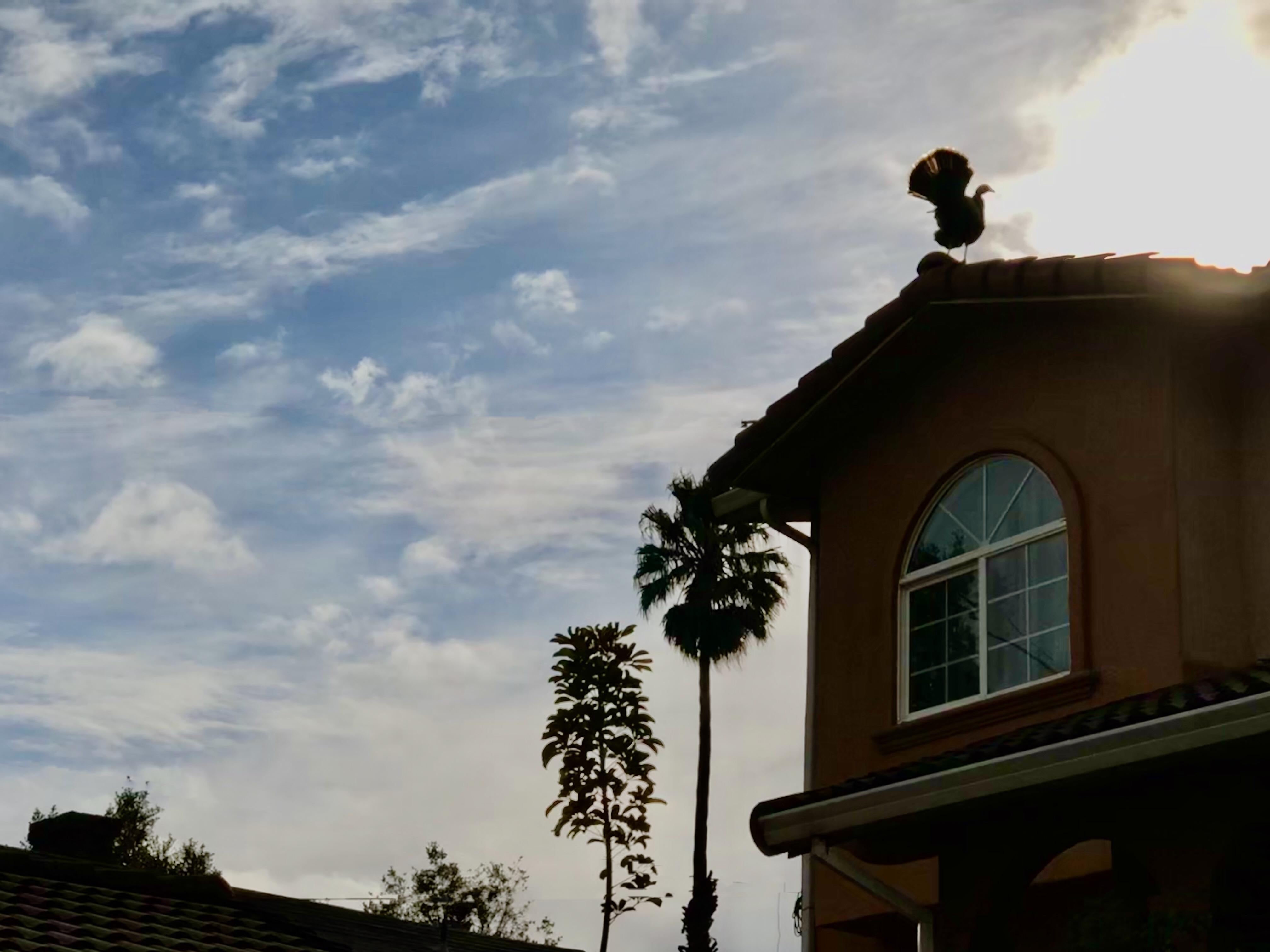 Roof turkey