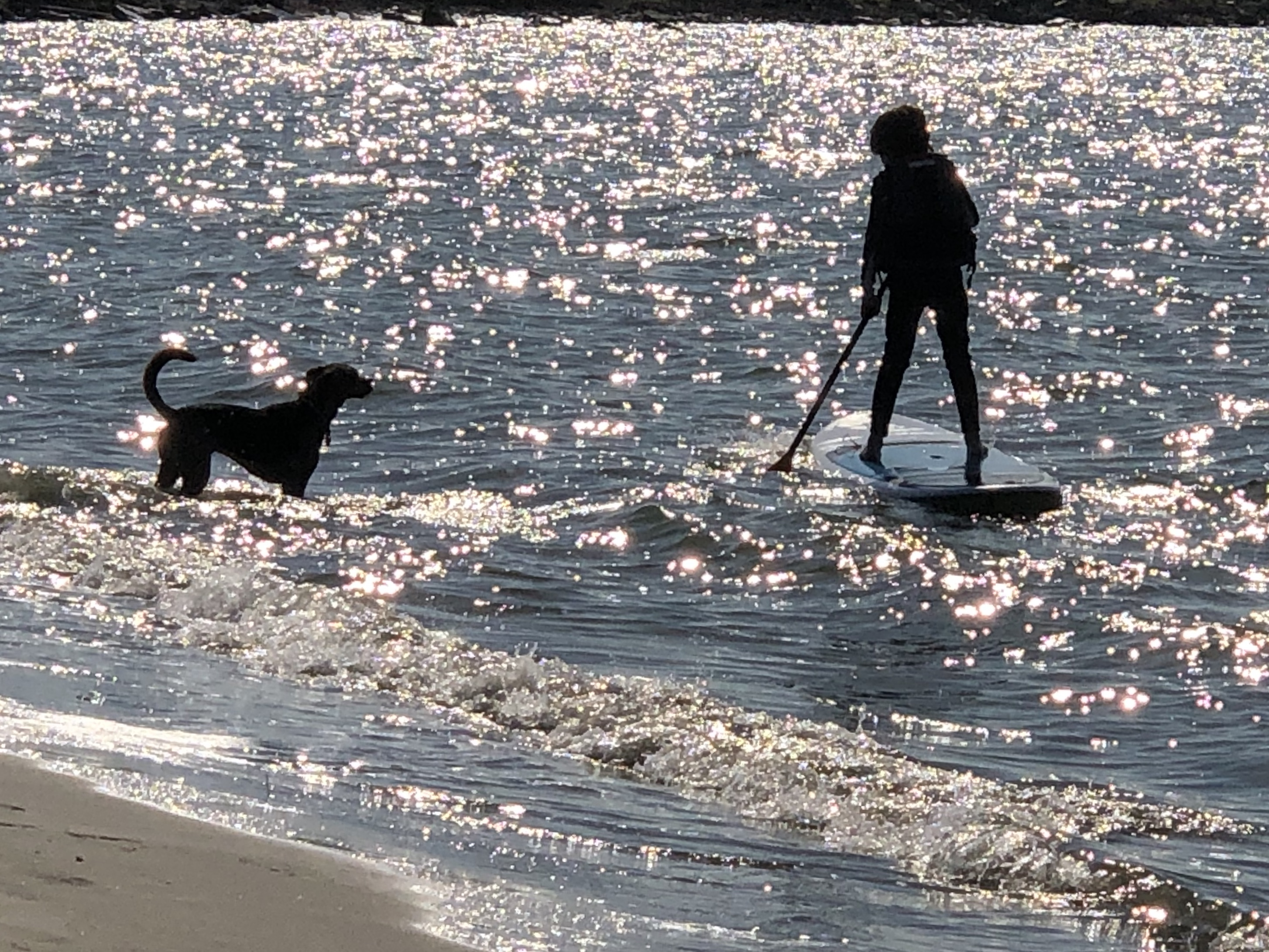 Dog and paddle boarder
