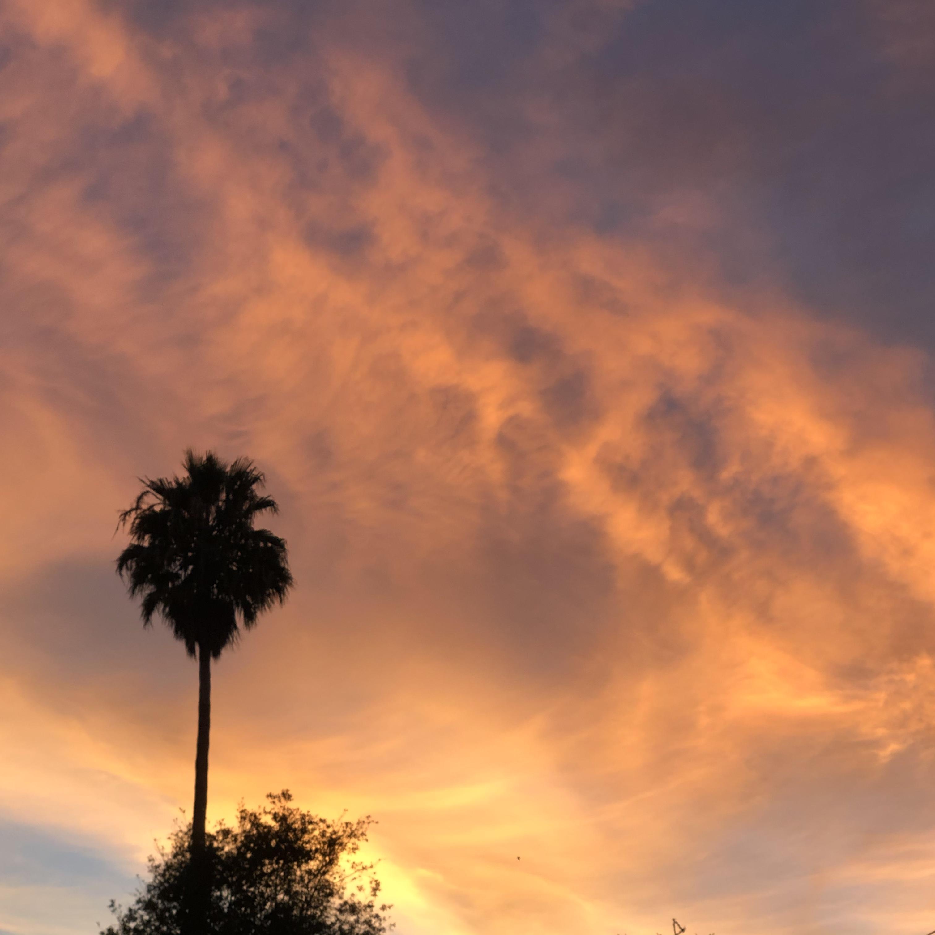 Palm September