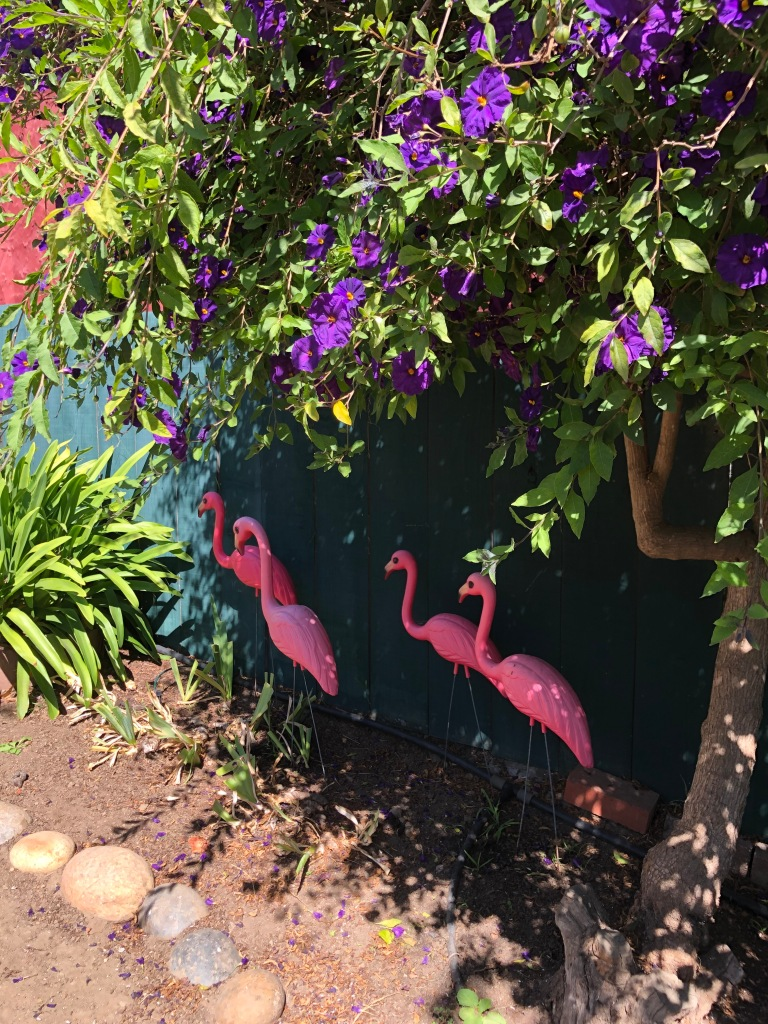 pink flamings